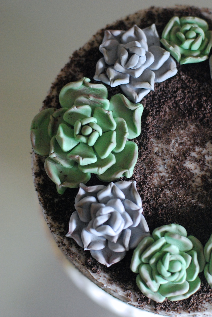 Succulent_cake_afternoon_crumbs_3